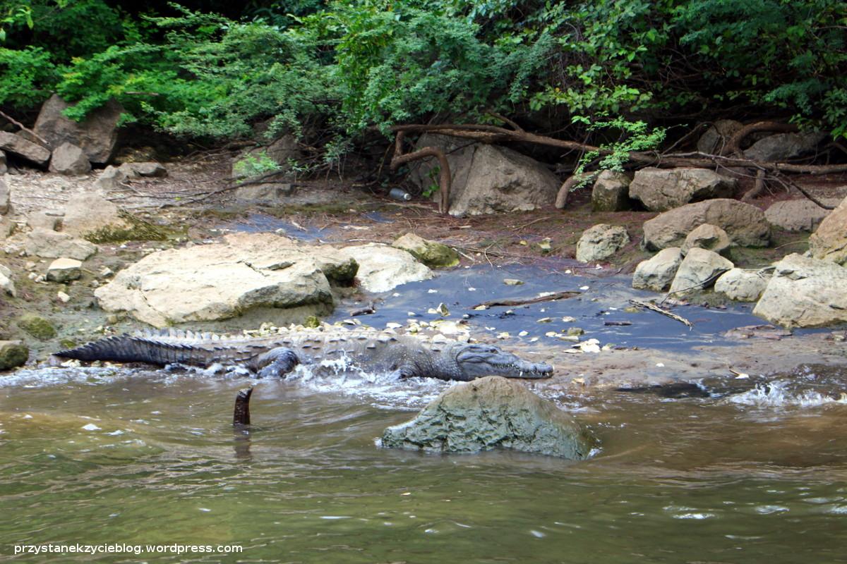 sumidero_krokodyl