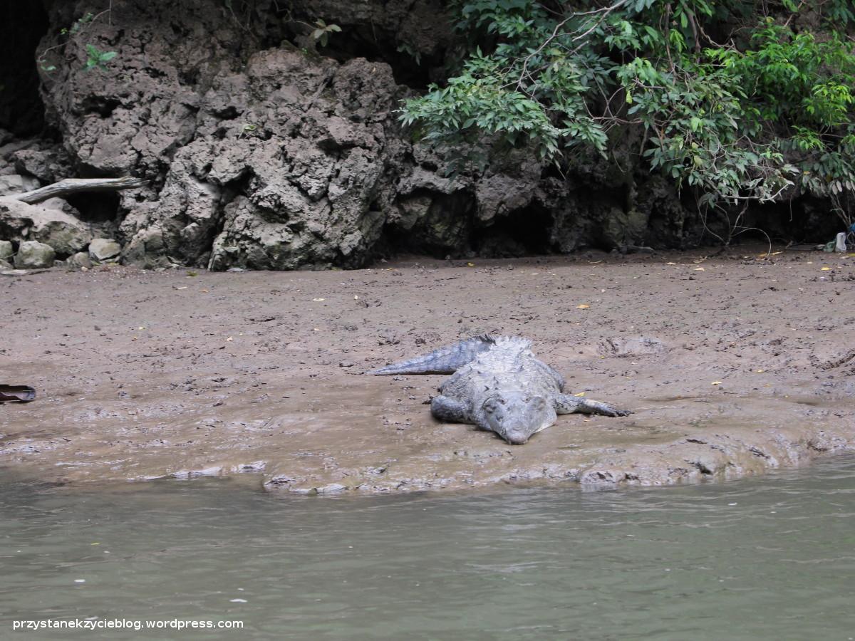 sumidero_krokodyl3